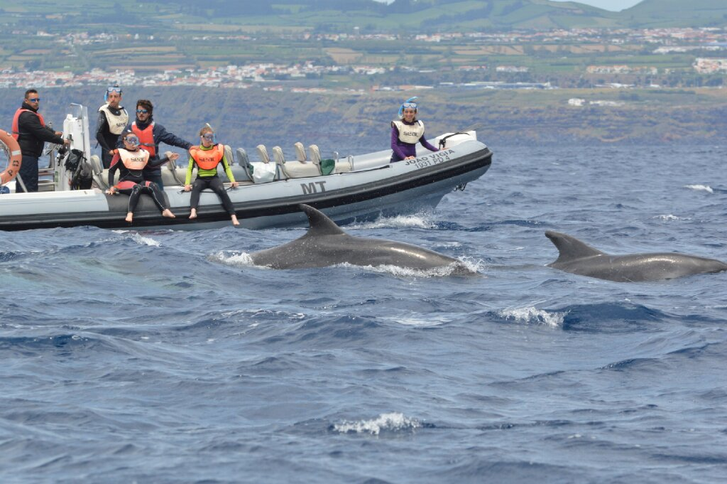 swimming with dolphins azores