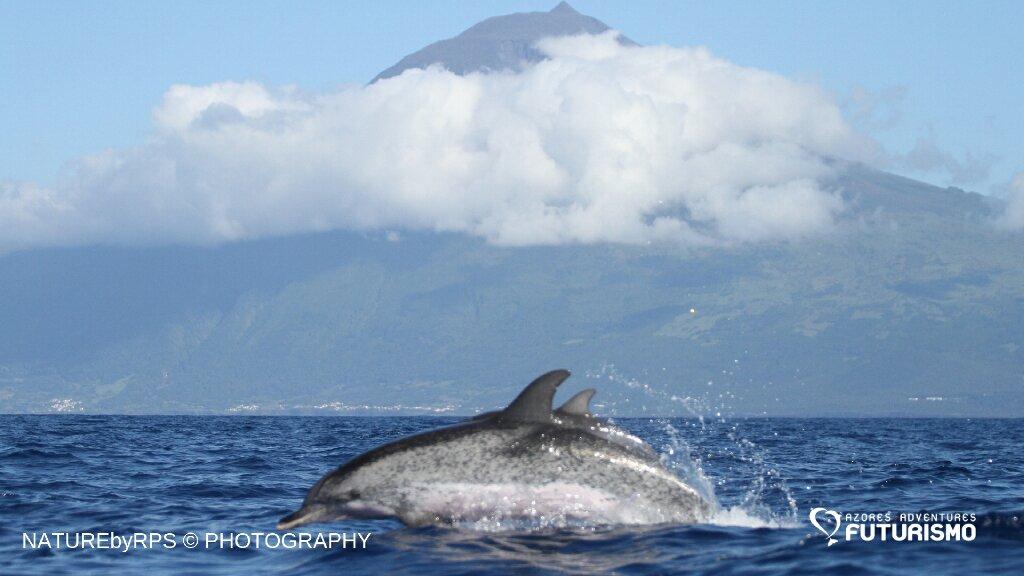 dolphins pico island