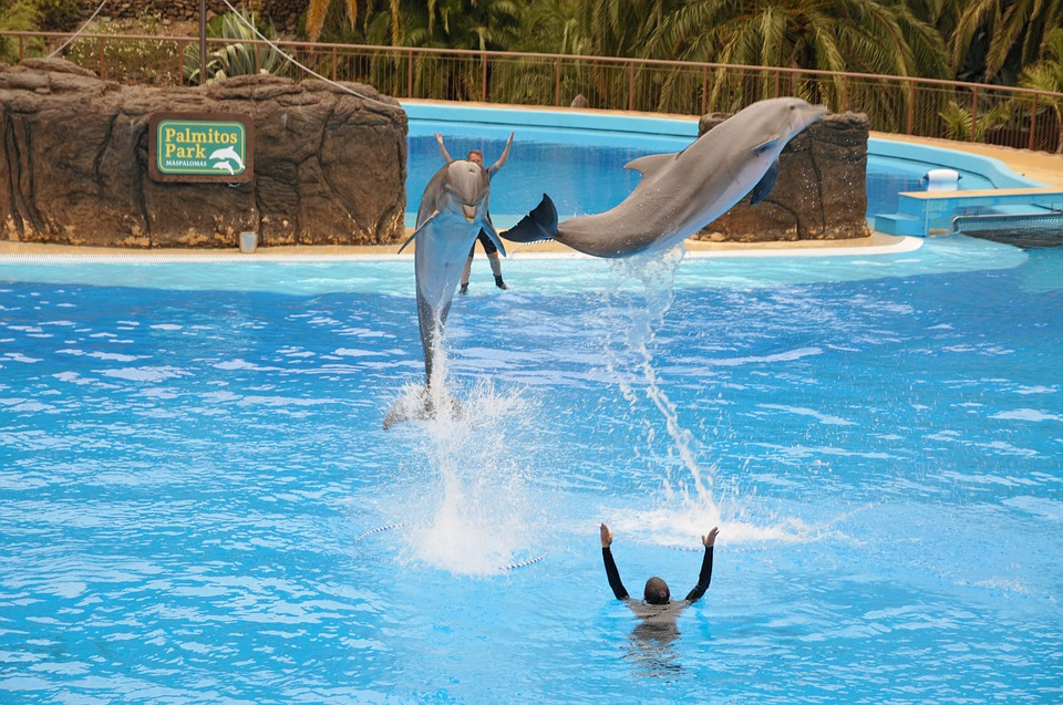 captivity dolphins
