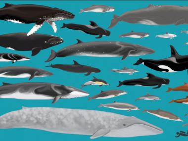 Cetaceans-of-azores-Futurismo