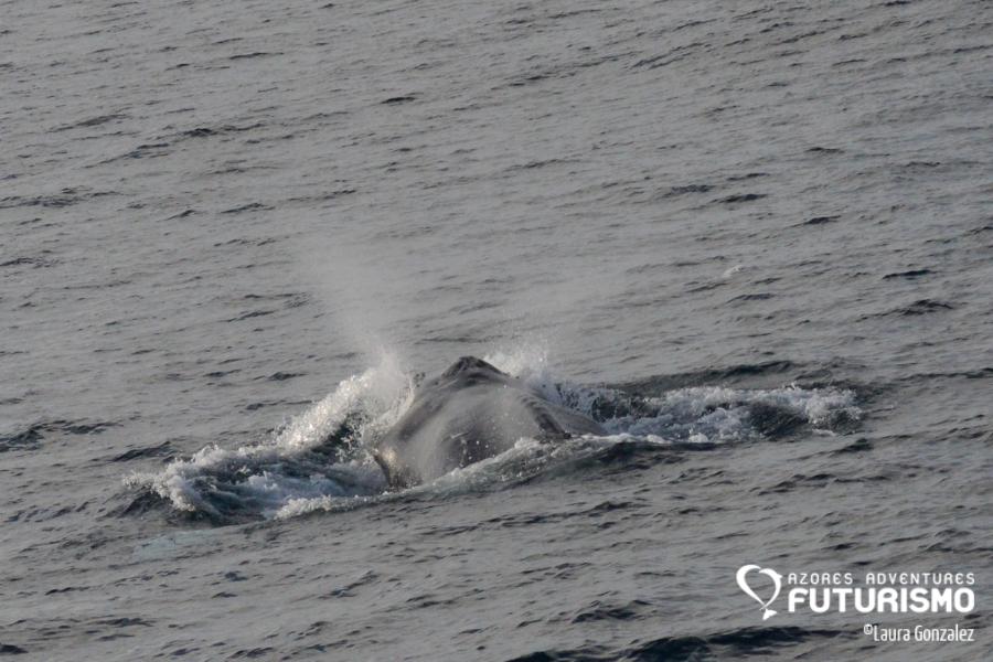 Humpback whale blow Futurismo