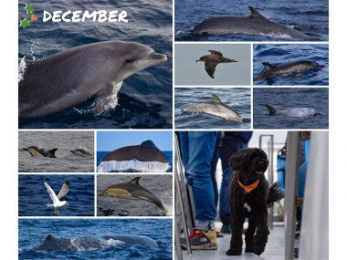 december 2019 sightings statistics