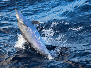 Female bottlenose dolphin showing its belly