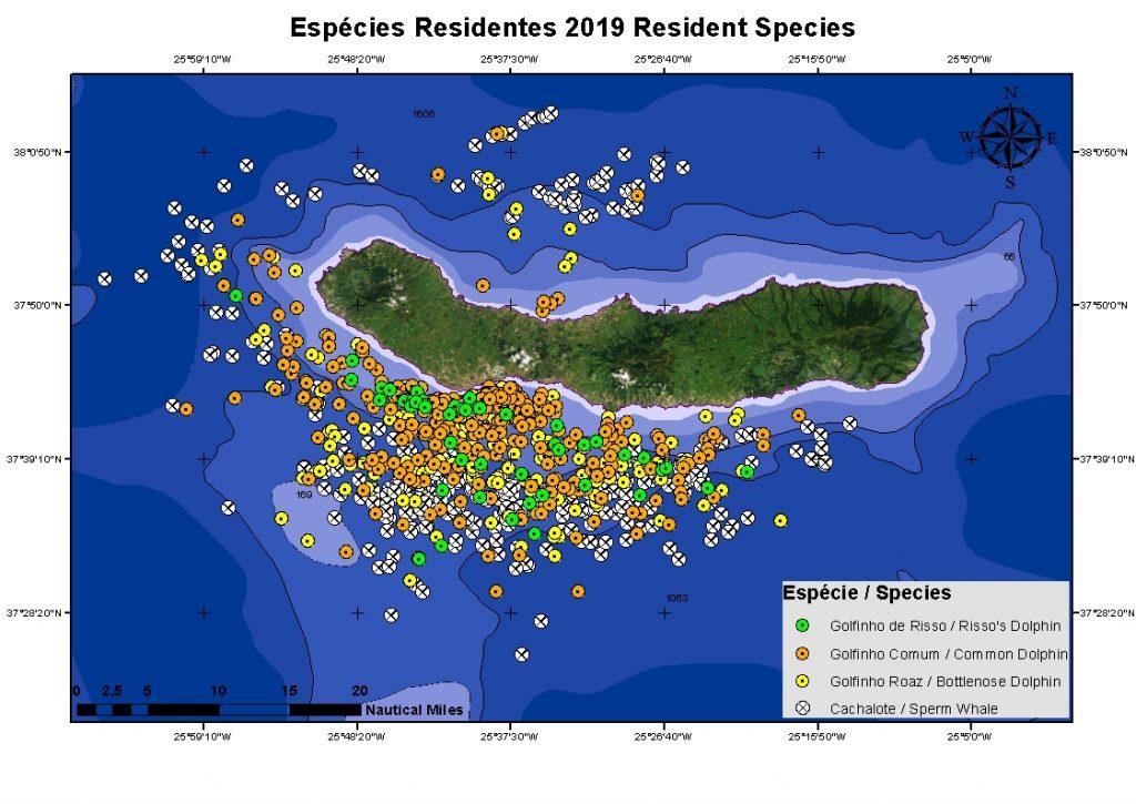 Resident cetaceans sightings Futurismo sao miguel 2019
