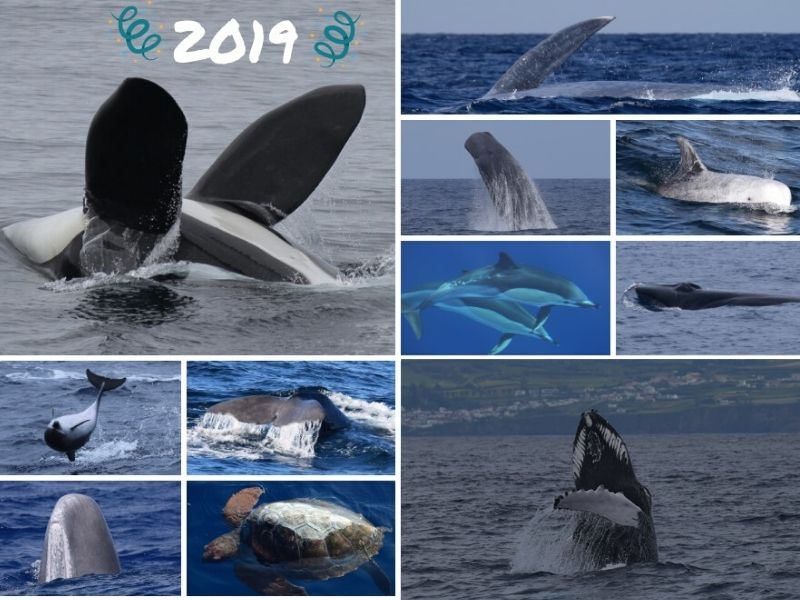 sightings 2019 sao miguel azores whale watching futurismo