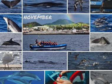 whale watching in november