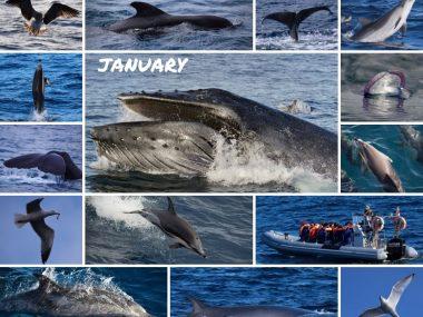 cetacean sightings january 2020