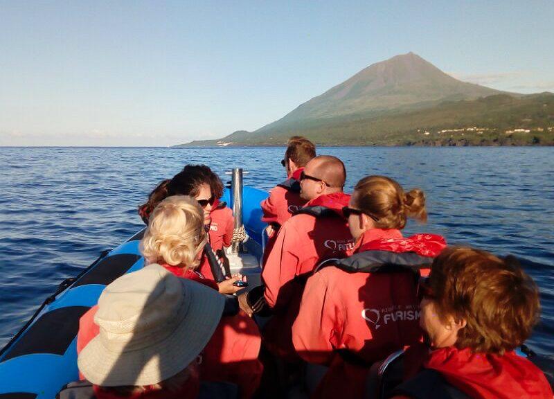baleias e golfinhos no pico