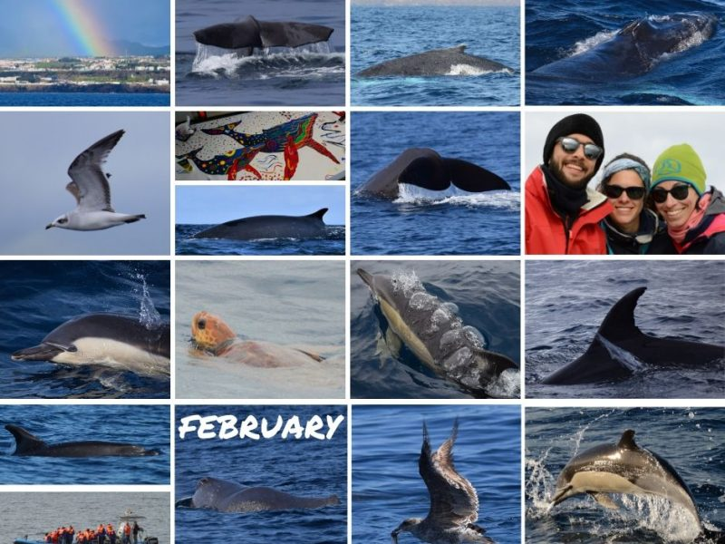 whale watching azores february