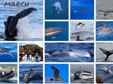 cetaceans azores