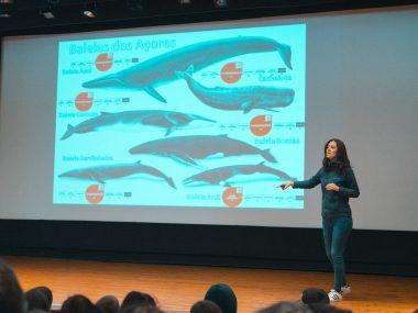 Baleias dos Açores