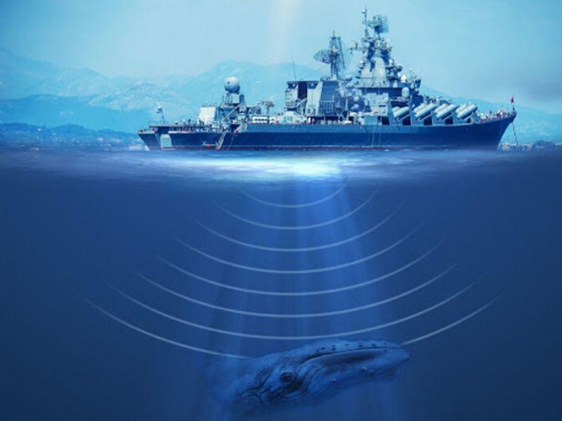 Active-sonar whales
