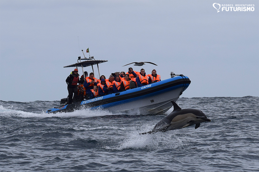 Futurismo Whale Watching Azores Cafre with dolphin