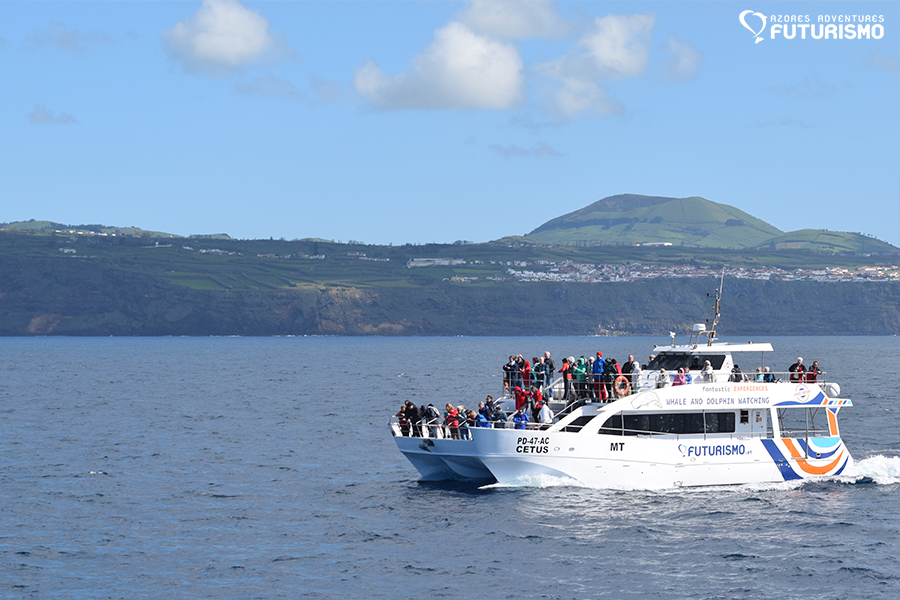 Futurismo Whale Watching Azores Cetus