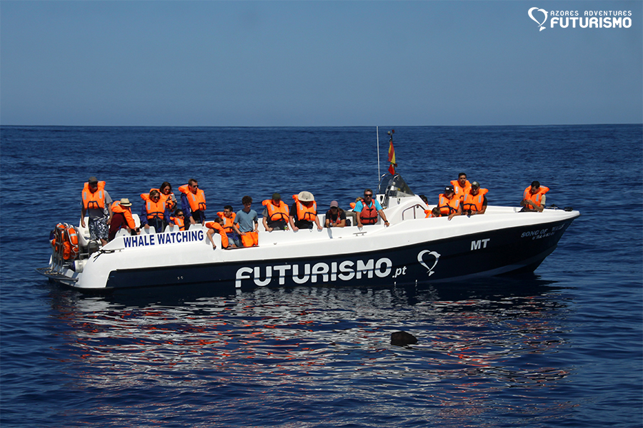 Futurismo Whale Watching Azores Song of Whales