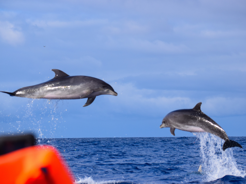 dolphins fly