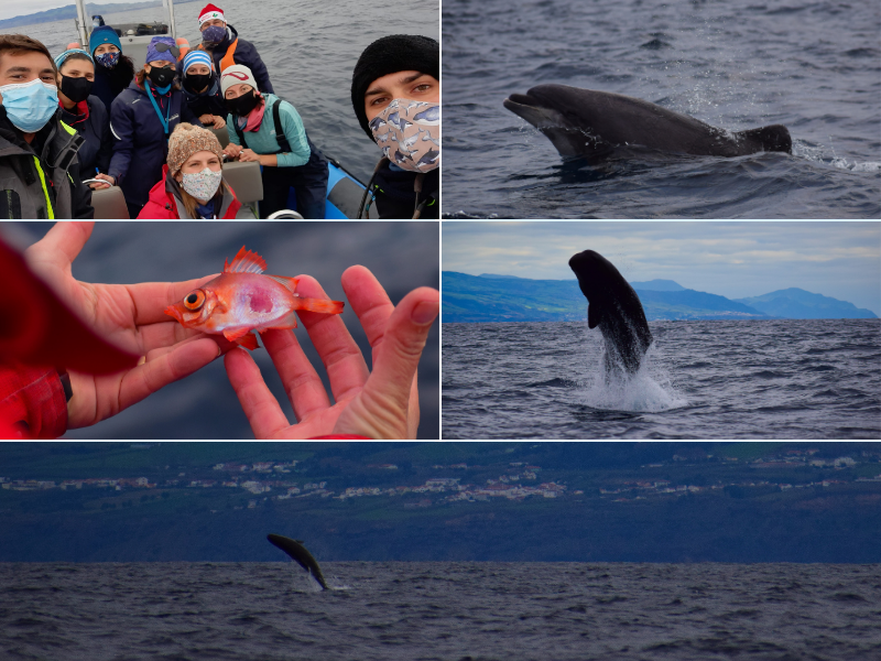research investigation cientific trip futurismo cetaceans