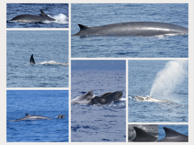 fin whales study biologists futurismo