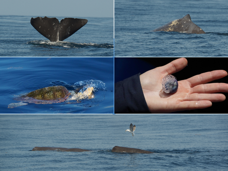 acoustic work sperm whales