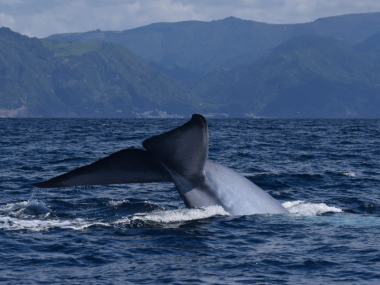 blue whale azores futurismo