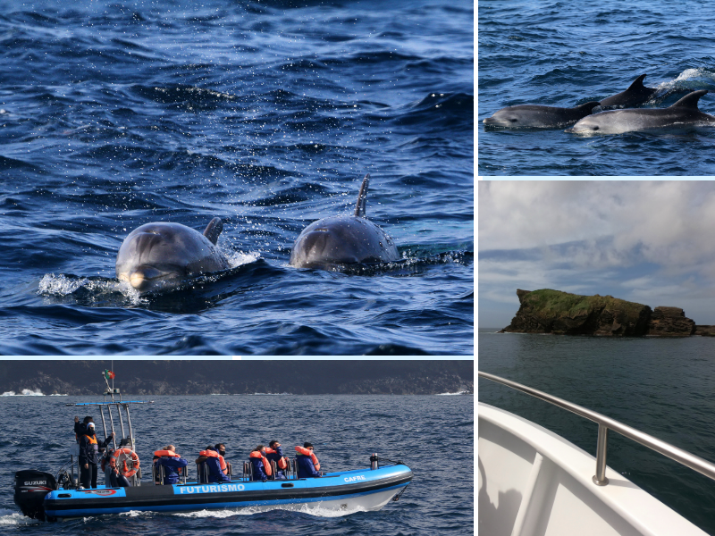 whale watching azores futurismo