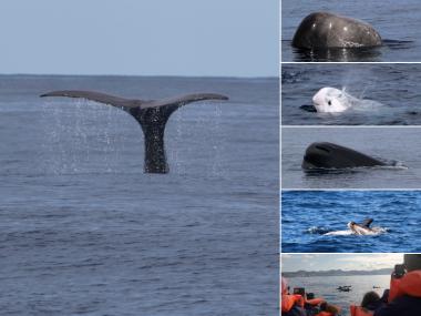 sperm whales futurismo