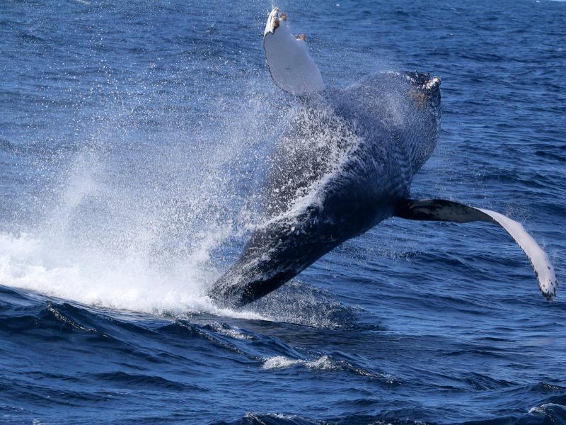 whale azores futurismo