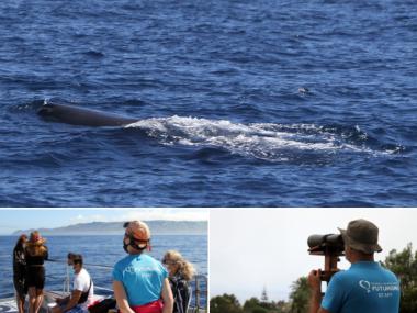 passeios mar baleias acores