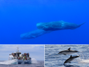 futurismo whale watching azores
