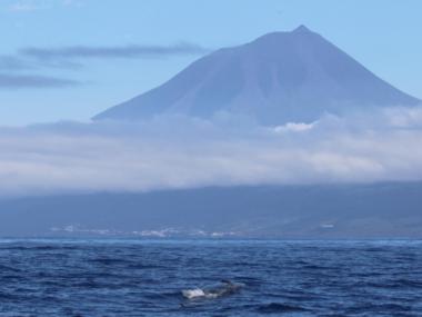 pico baleias