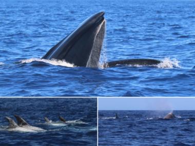 pico futurismo whales