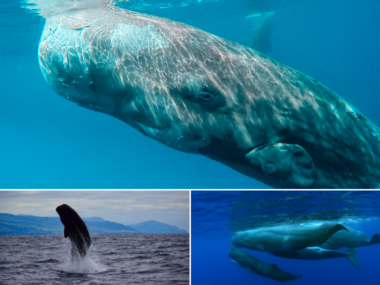 whales azores hope spot mission blue