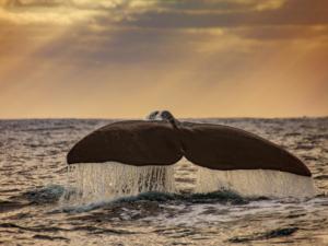 sperm whale mr liable futurismo